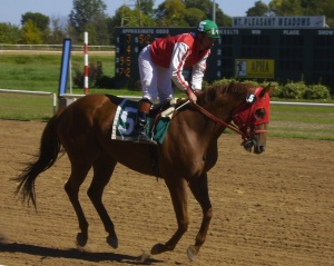 Jockey Lee Gates gallops Bobbin' For Loot in the post parade prior to a race at Mount Pleasant Meadows.
